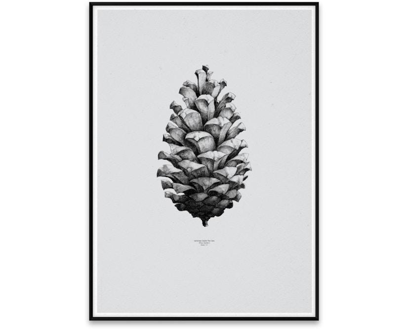 Paper Collective - 1:1 Pine Cone Poster - 01 - grau - 1