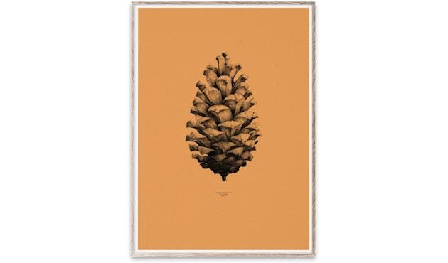 Paper Collective - 1:1 Pine Cone Poster - 01 - orange - 1