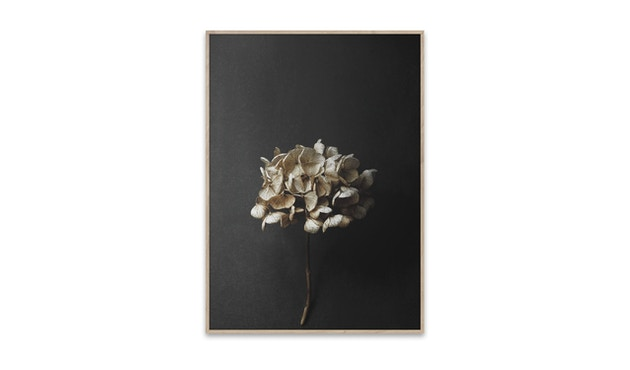 Paper Collective - Still Life - 01 - 1