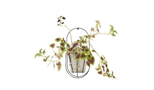 OK Design - Cibele Pflanzen Wandhalter - Black - Small - 6