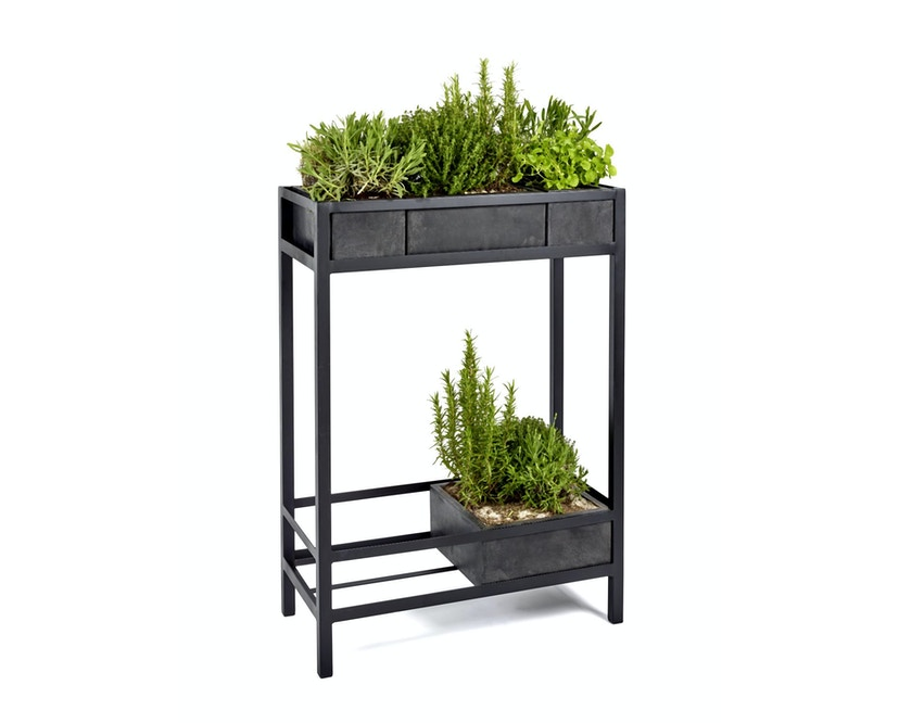 Growth Plant Regal - black