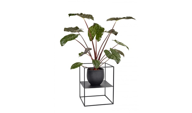Serax - Plant Display Regal - white - small - 2