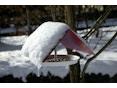 Flora - Birdy Vogelhaus - 2