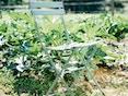 Fermob - BISTRO Naturel Klappstuhl - 65 Lindgrün matt - 3