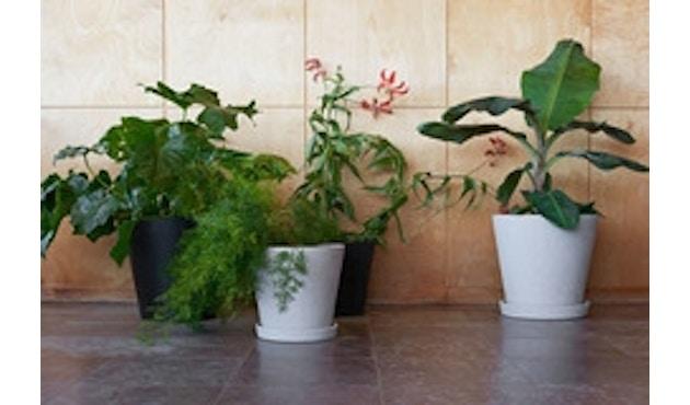 Blumentopf mit Untersetzer