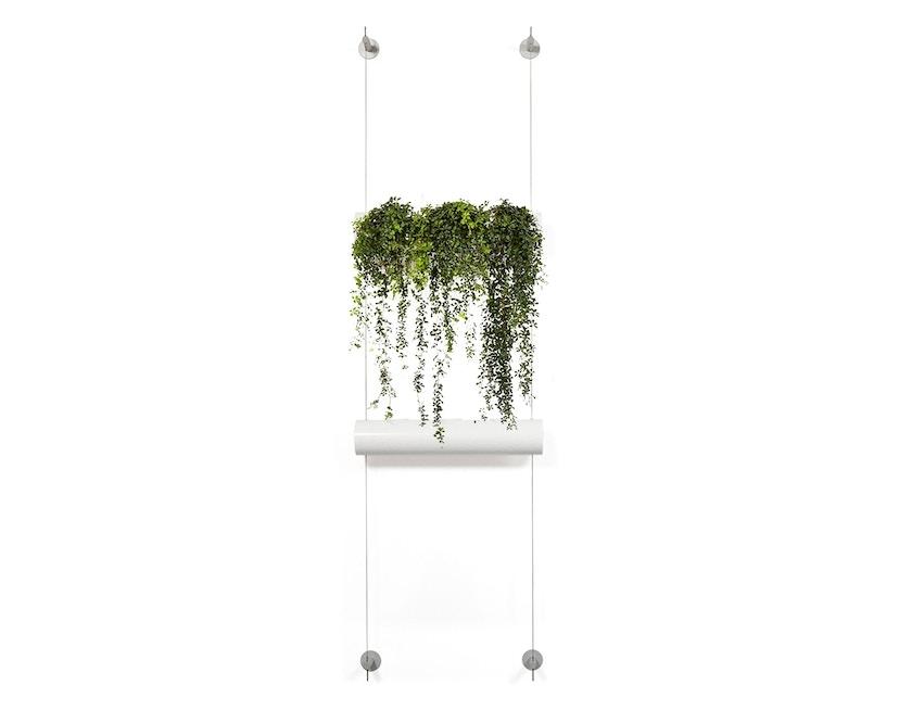 Urbanature - Hängegarten Die Wandbegrünung - 1 Pflanzröhre - 1