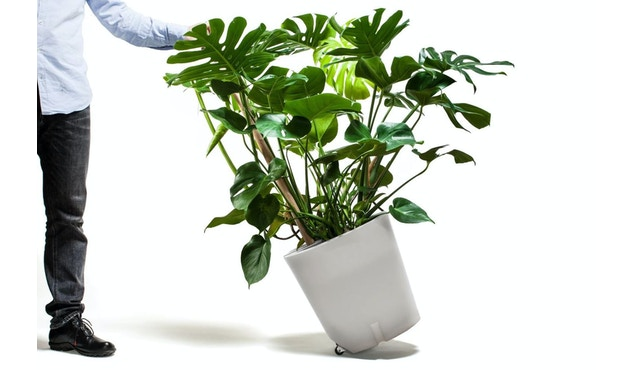 Pflanzentrolley Pflanzenkübel